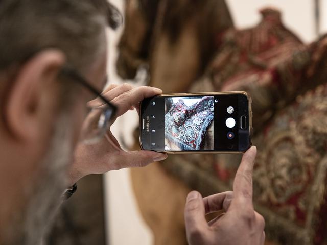 En person fotograferar hästen Streiff med sin mobil.