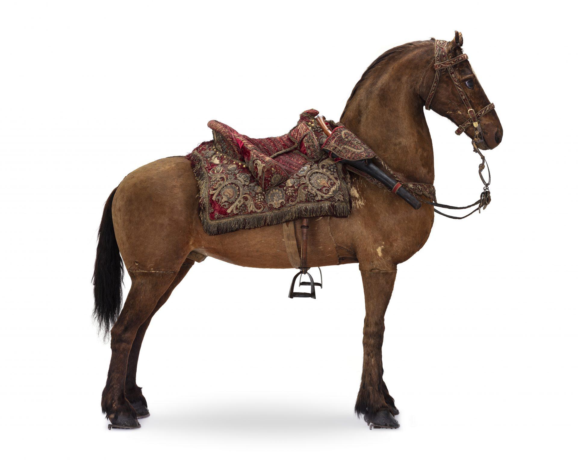 Häst i profil med sadel och betsel.