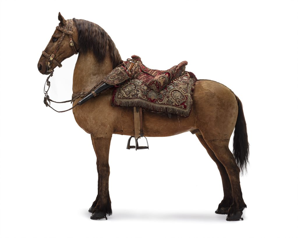 A horse in profile.